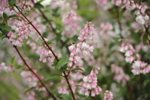Shrubs 5, Best Garden, Home And DIY Tips