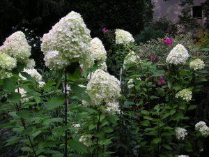 Shrubs 6, Best Garden, Home And DIY Tips