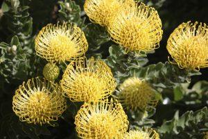 Shrubs 7, Best Garden, Home And DIY Tips