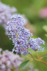 Shrubs 8, Best Garden, Home And DIY Tips
