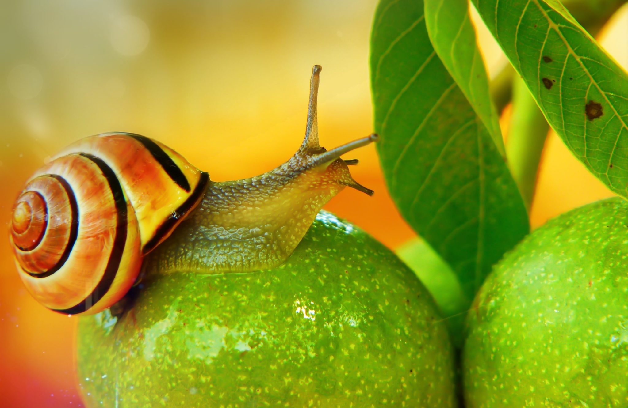 snails, Fighting snails: 6 home remedies and 2 chemical methods, Best Garden, Home And DIY Tips