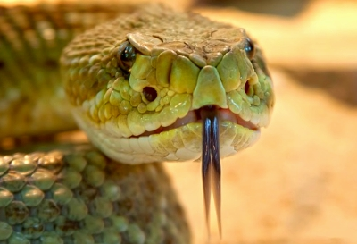 snakes, Snakes in the US, Best Garden, Home And DIY Tips