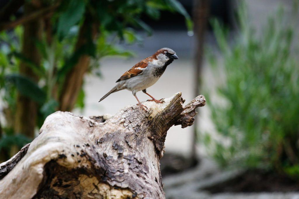 Sparrow 5158582 1920 1024x683, Best Garden, Home And DIY Tips