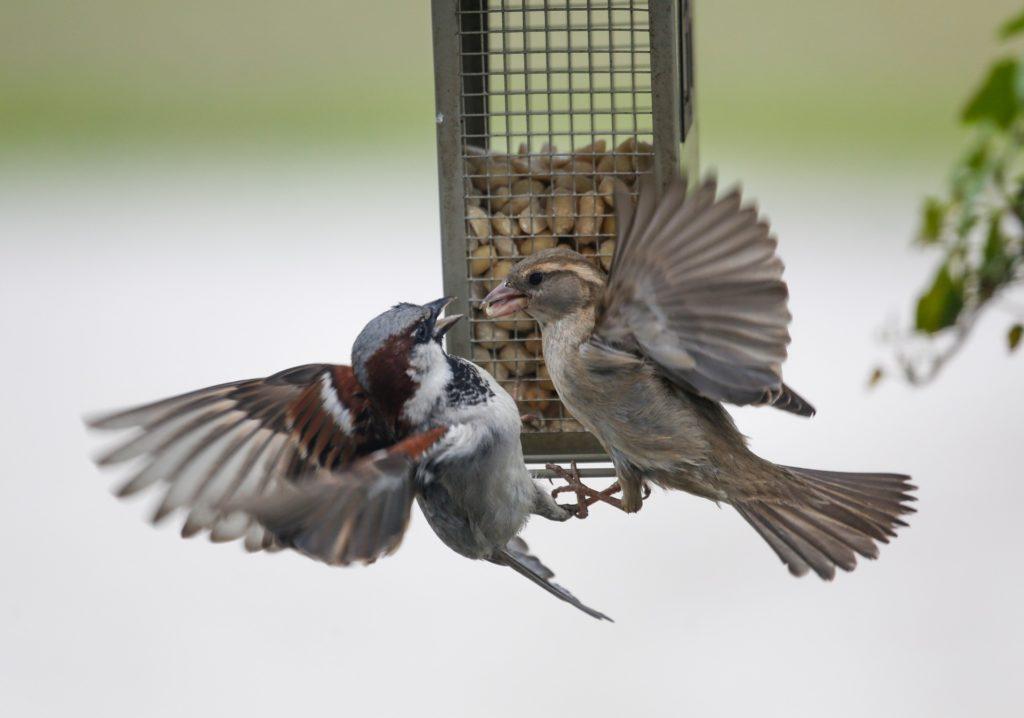 Sparrow 5162442 1920 1024x718, Best Garden, Home And DIY Tips