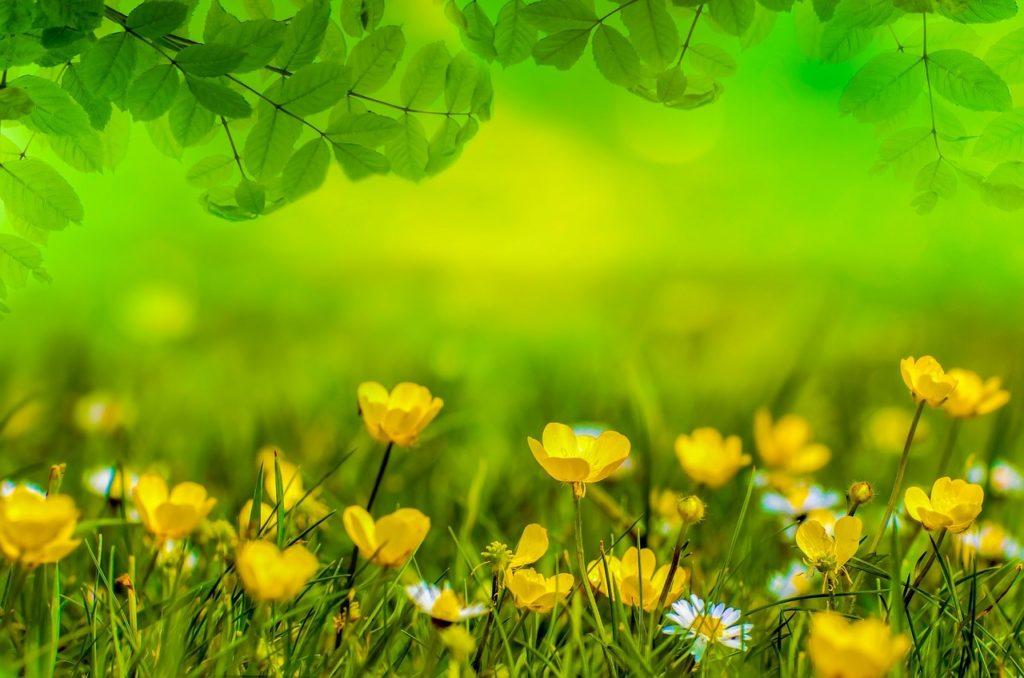 Spring 316534 1280 1024x678, Best Garden, Home And DIY Tips
