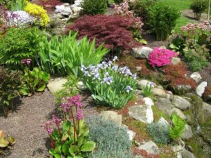 rock garden, How to create a rock garden: Instructions, tips and ideas for design, Best Garden, Home And DIY Tips