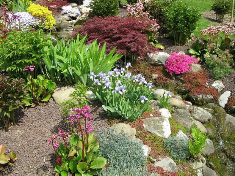 How to create a rock garden: Instructions, tips and ideas for design