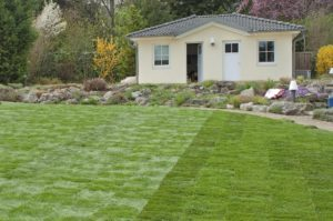 turf, Fertilization tips for new turf, Best Garden, Home And DIY Tips