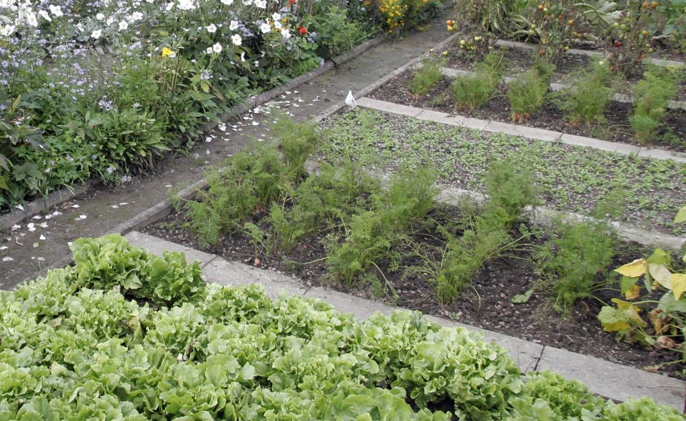 Vegetable Garden 2, Best Garden, Home And DIY Tips