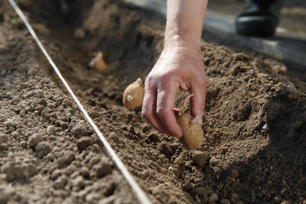 Vegetable Garden 5, Best Garden, Home And DIY Tips