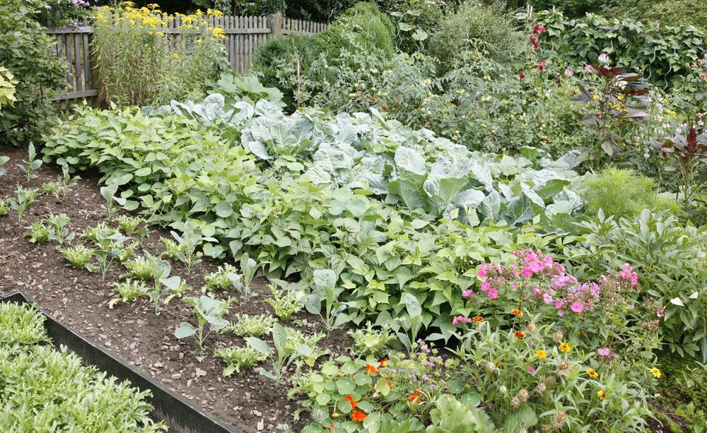 Vegetable Garden, Best Garden, Home And DIY Tips