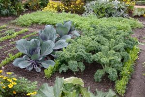 vegetable patch, Small area, big yield: cleverly plan a vegetable patch, Best Garden, Home And DIY Tips