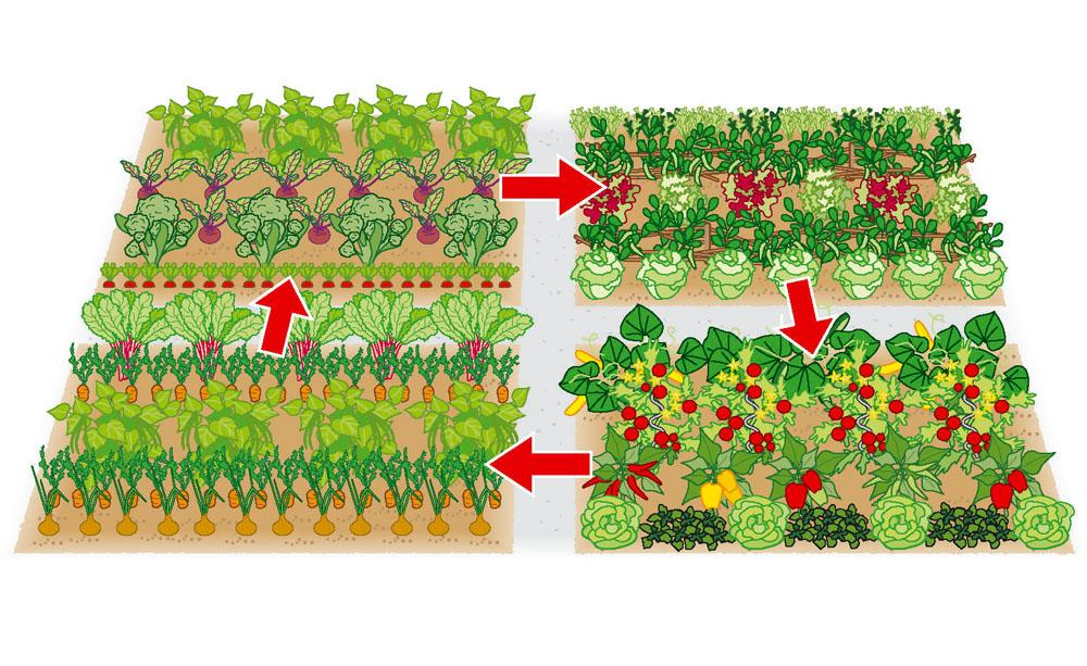 Vegetable Patch 3, Best Garden, Home And DIY Tips