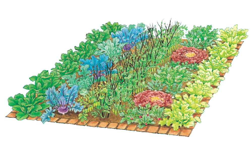 Vegetable Patch 4, Best Garden, Home And DIY Tips