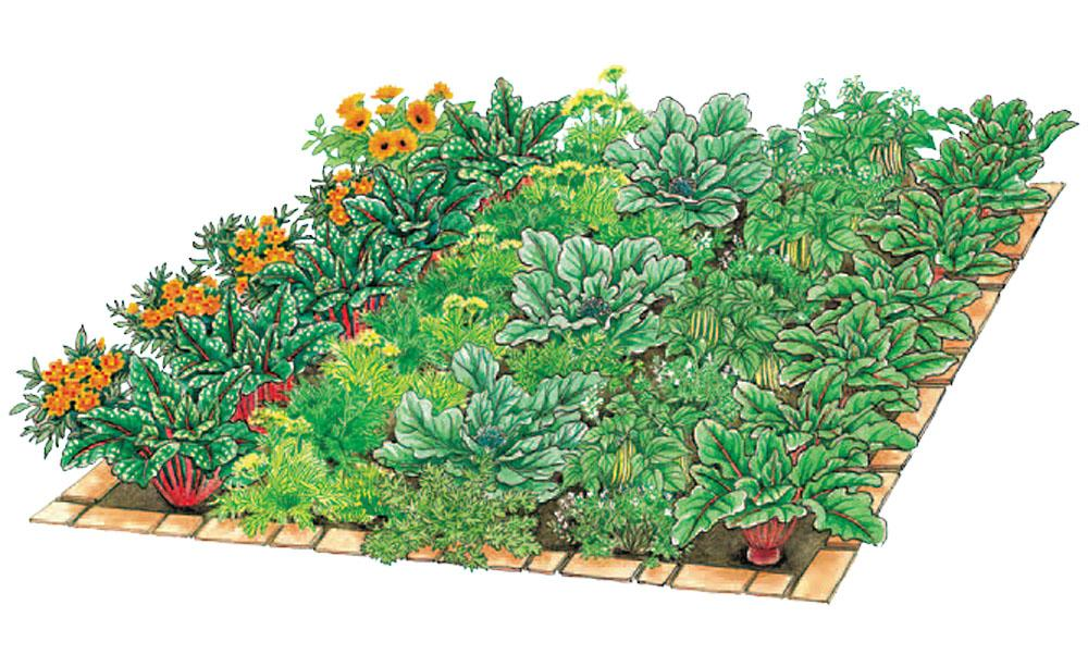 Vegetable Patch 5, Best Garden, Home And DIY Tips