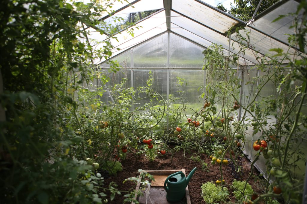 Vegetables 3 1024x683, Best Garden, Home And DIY Tips