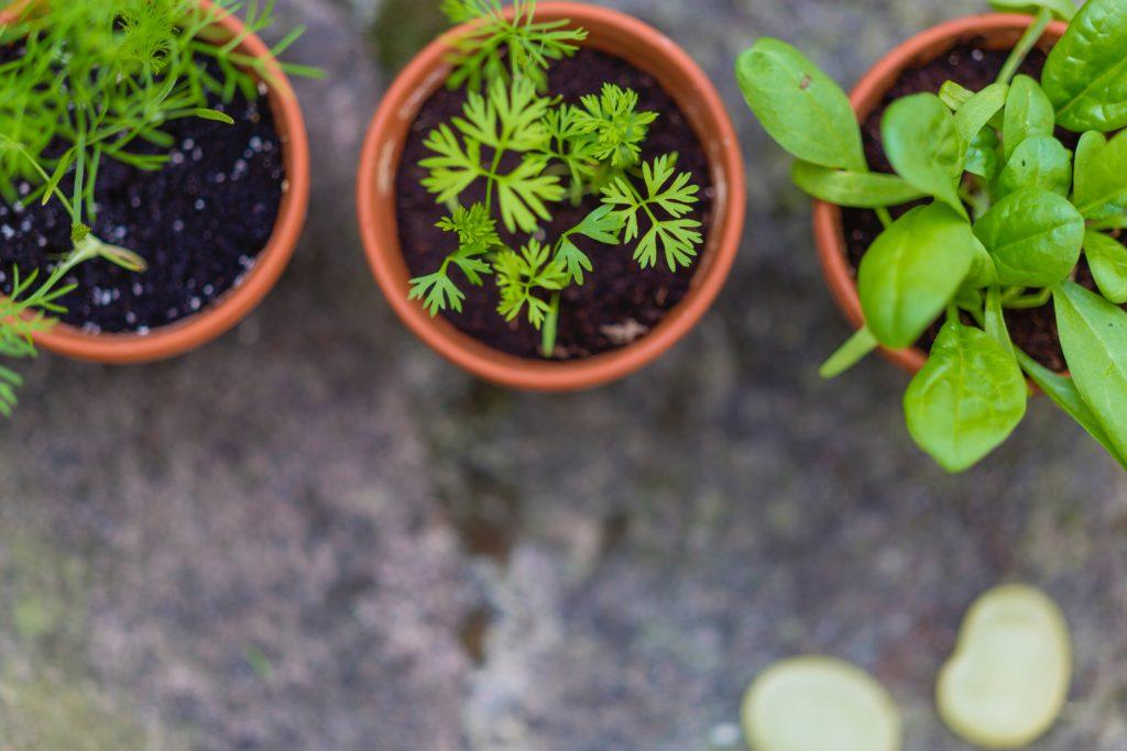 Vegetables 5 1024x683, Best Garden, Home And DIY Tips