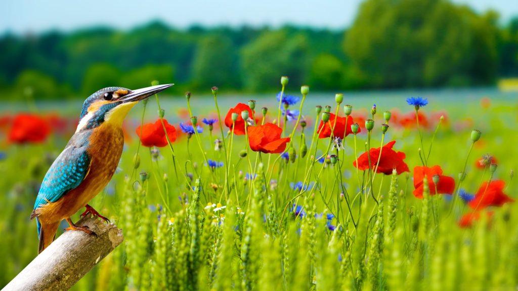 Wallpaper 3362712 1920 1024x575, Best Garden, Home And DIY Tips