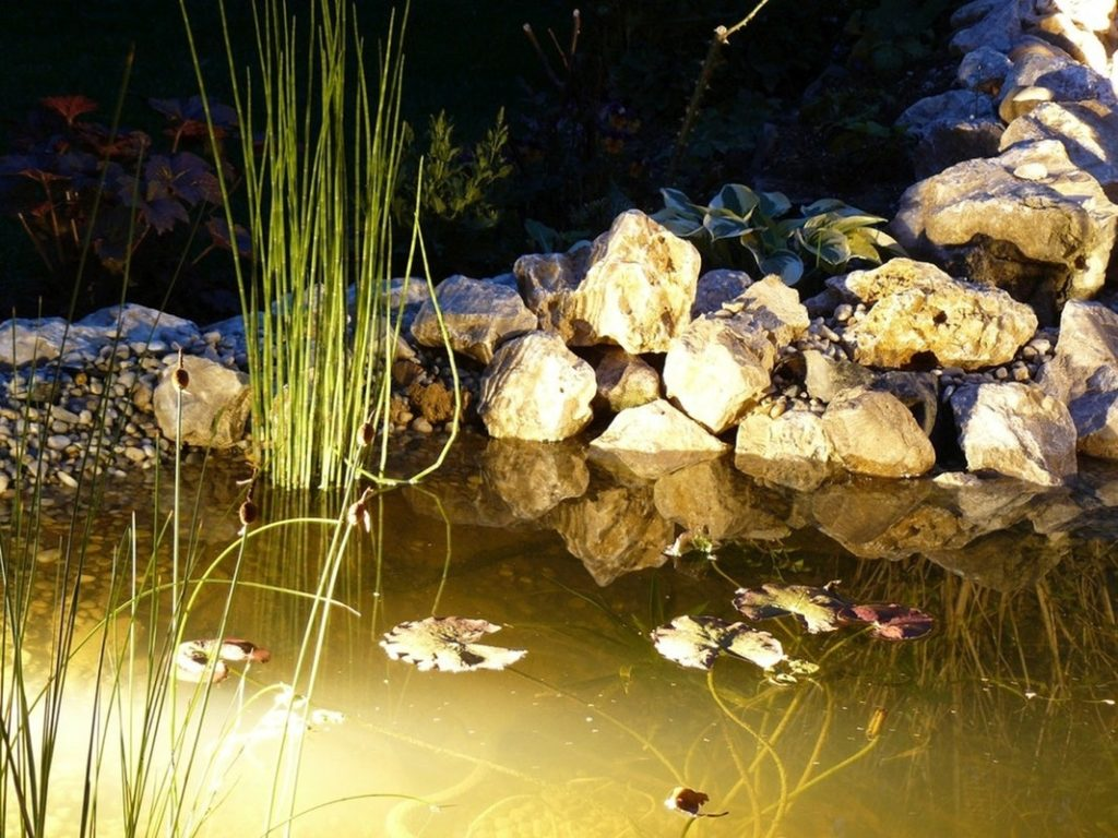Garden Pond 11 1024x768, Best Garden, Home And DIY Tips