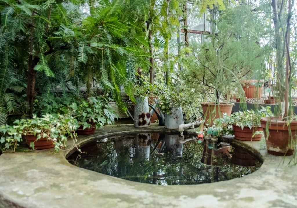 Garden Pond 2 1024x717, Best Garden, Home And DIY Tips