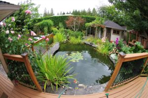 garden pond, Garden pond: How to build, plant and maintain it, Best Garden, Home And DIY Tips