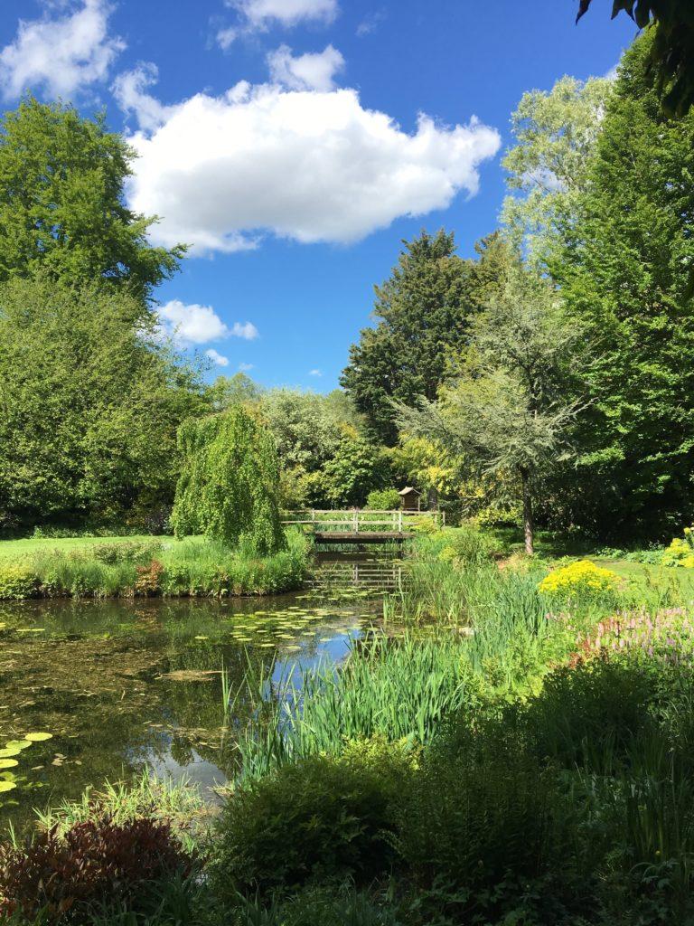 Garden Pond 4 768x1024, Best Garden, Home And DIY Tips