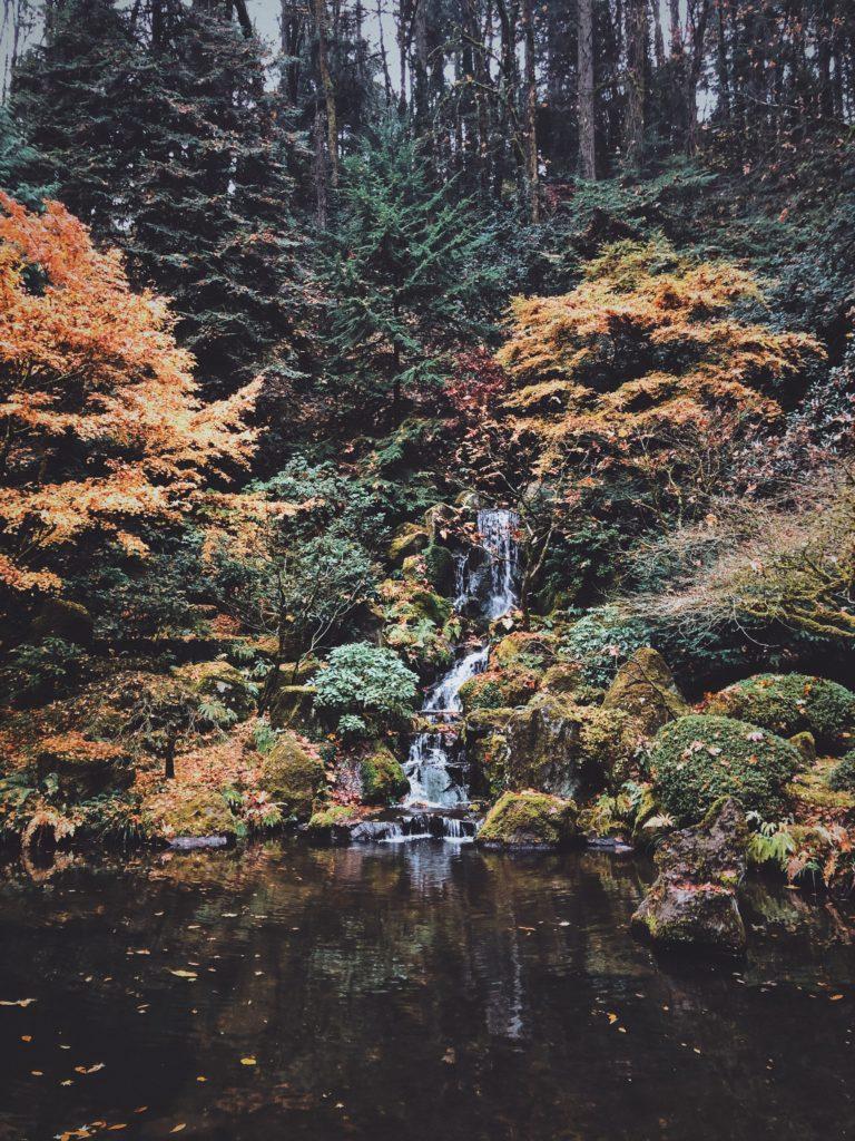 Garden Pond 9 768x1024, Best Garden, Home And DIY Tips