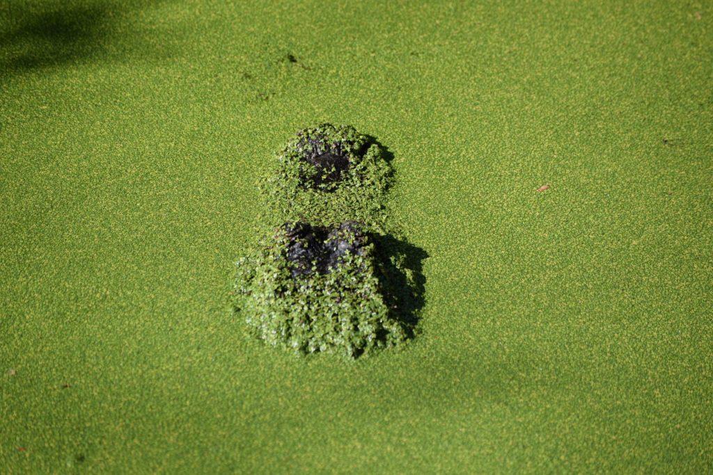 Algae 2 1024x683, Best Garden, Home And DIY Tips