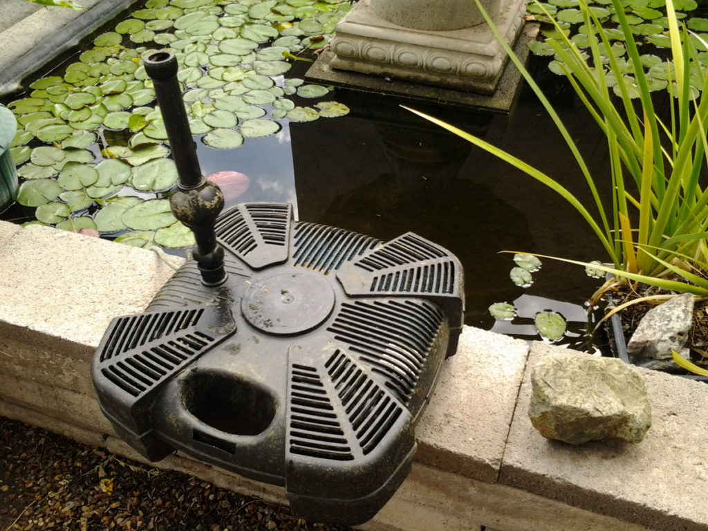 Algae 6 1024x768, Best Garden, Home And DIY Tips