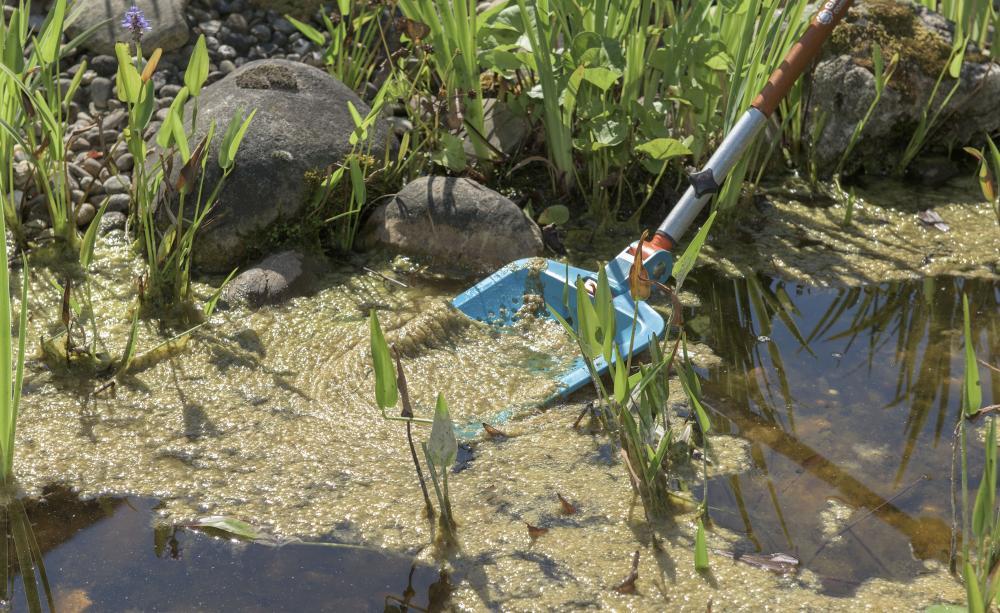 Algae 7, Best Garden, Home And DIY Tips