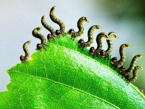 Caterpillars 2, Best Garden, Home And DIY Tips