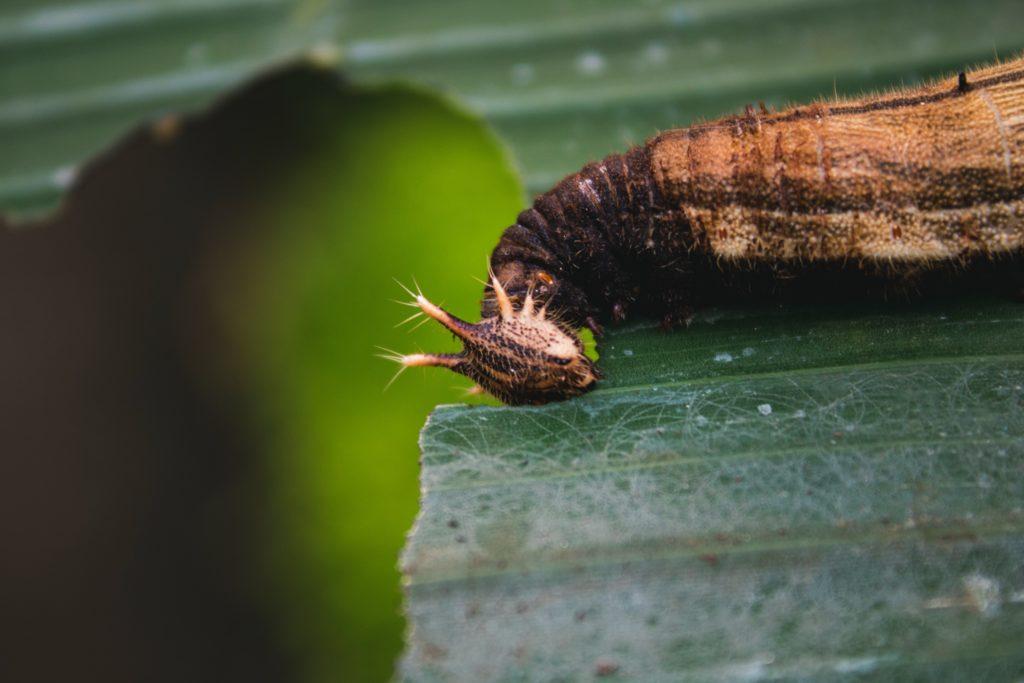 Caterpillars 3 1024x683, Best Garden, Home And DIY Tips