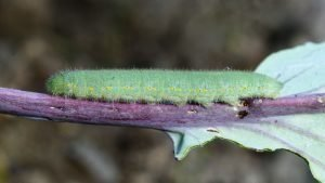 Caterpillars 4, Best Garden, Home And DIY Tips