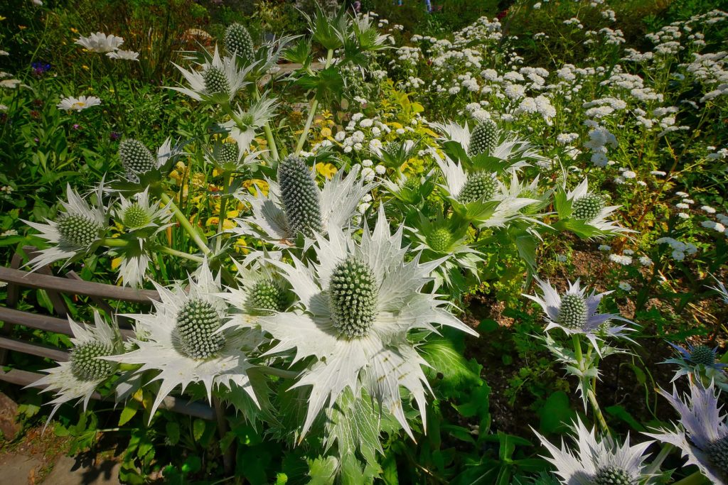 English Garden 10 1024x683, Best Garden, Home And DIY Tips