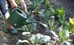 fertilizer, Make fertilizer for the garden yourself, Best Garden, Home And DIY Tips