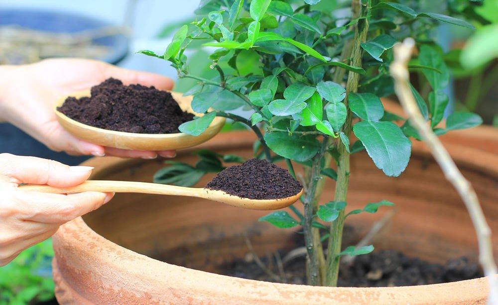 Fertilizer 4, Best Garden, Home And DIY Tips