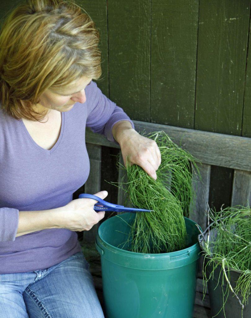 Fertilizer 6 809x1024, Best Garden, Home And DIY Tips