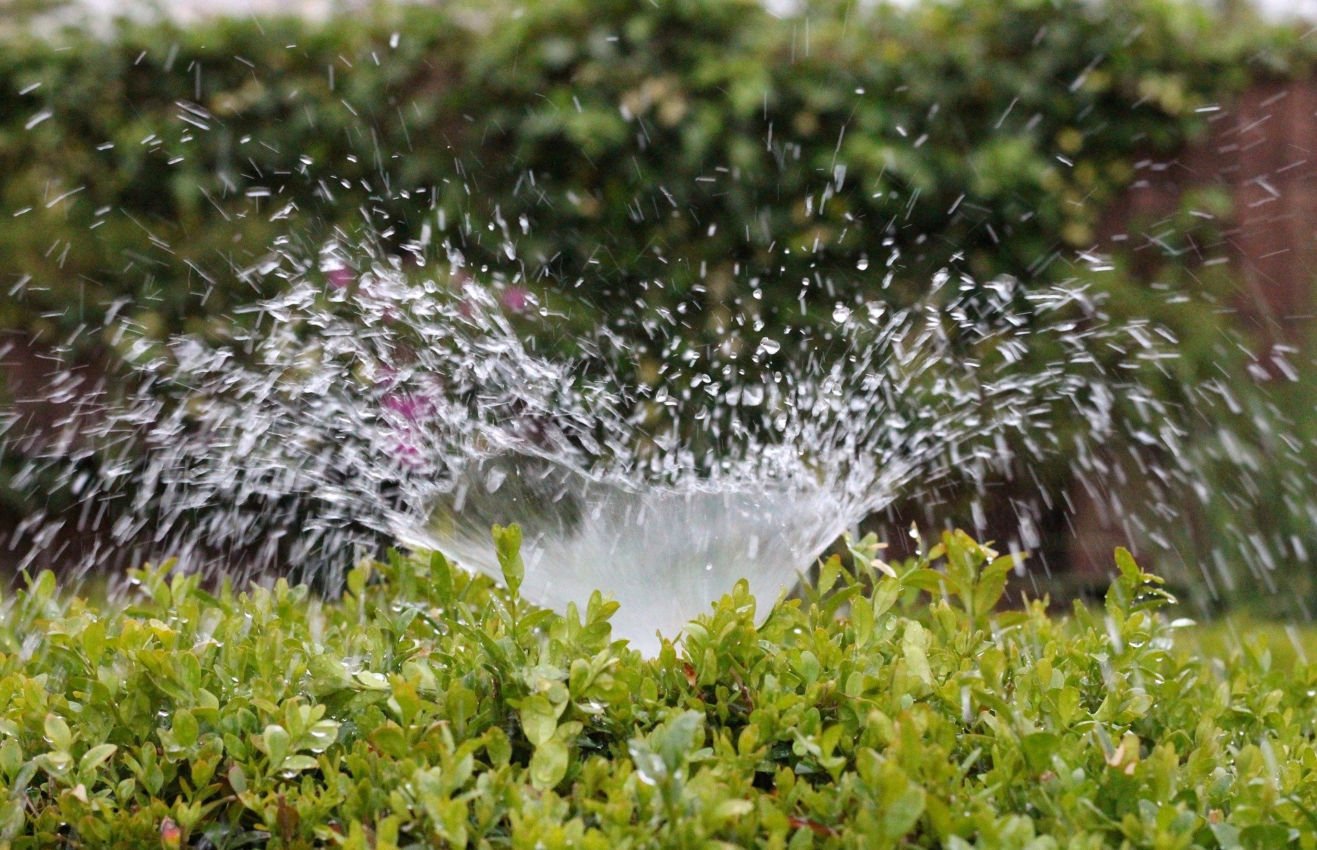 irrigation, Build irrigation for the garden yourself – Here's how, Best Garden, Home And DIY Tips