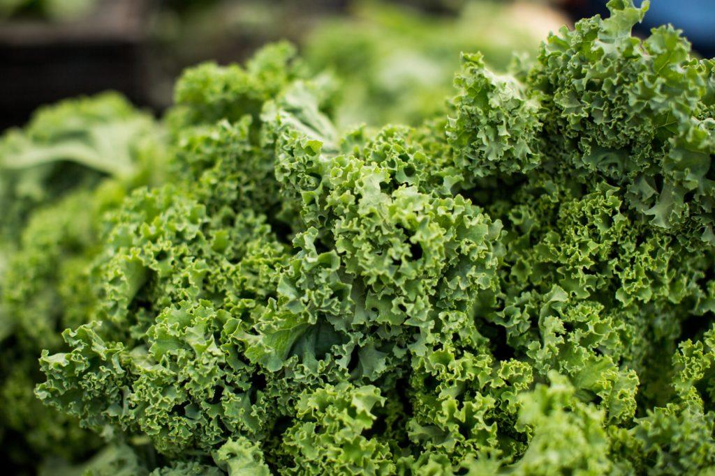 Kale 3 1024x683, Best Garden, Home And DIY Tips