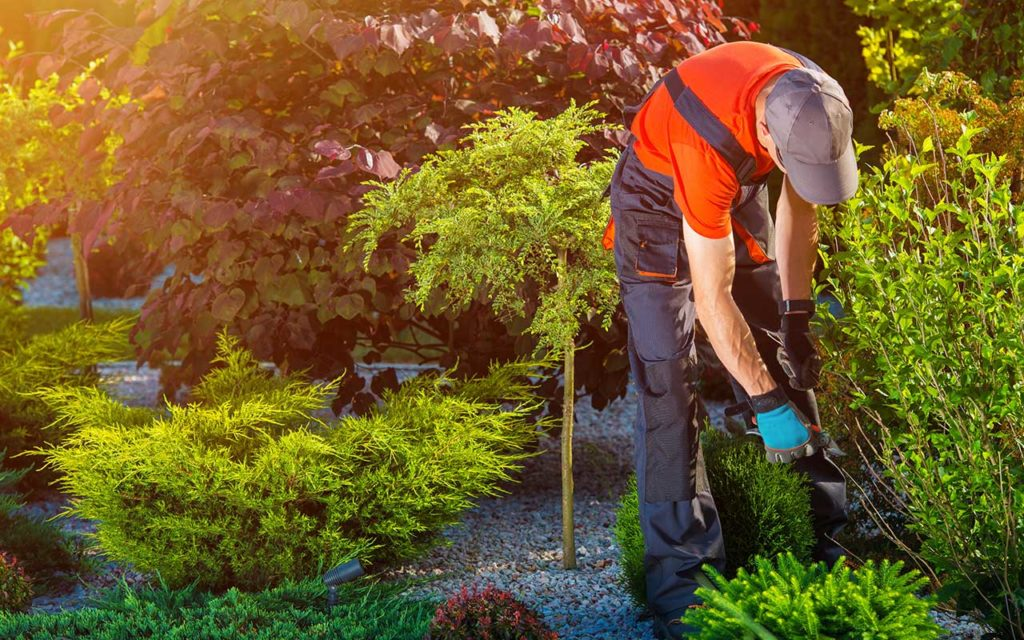 Landscaping 15 1024x640, Best Garden, Home And DIY Tips