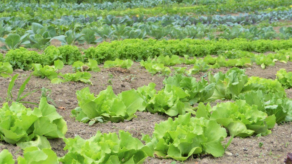 Salad 1024x575, Best Garden, Home And DIY Tips