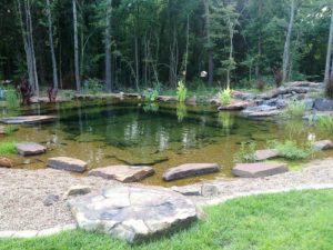 swimming pond, Plan, create and maintain the swimming pond, Best Garden, Home And DIY Tips