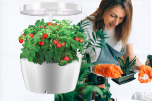 , Hydroponic Systems for Growing Vegetables Indoors, Best Garden, Home And DIY Tips