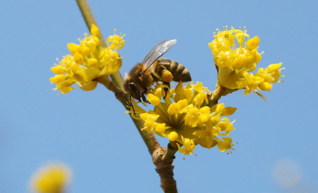 Bee Friendly Shrubs 10, Best Garden, Home And DIY Tips