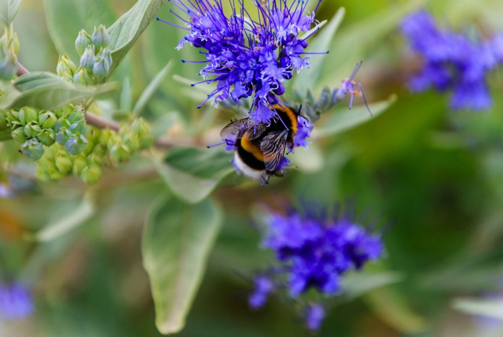 Bee Friendly Shrubs 12, Best Garden, Home And DIY Tips