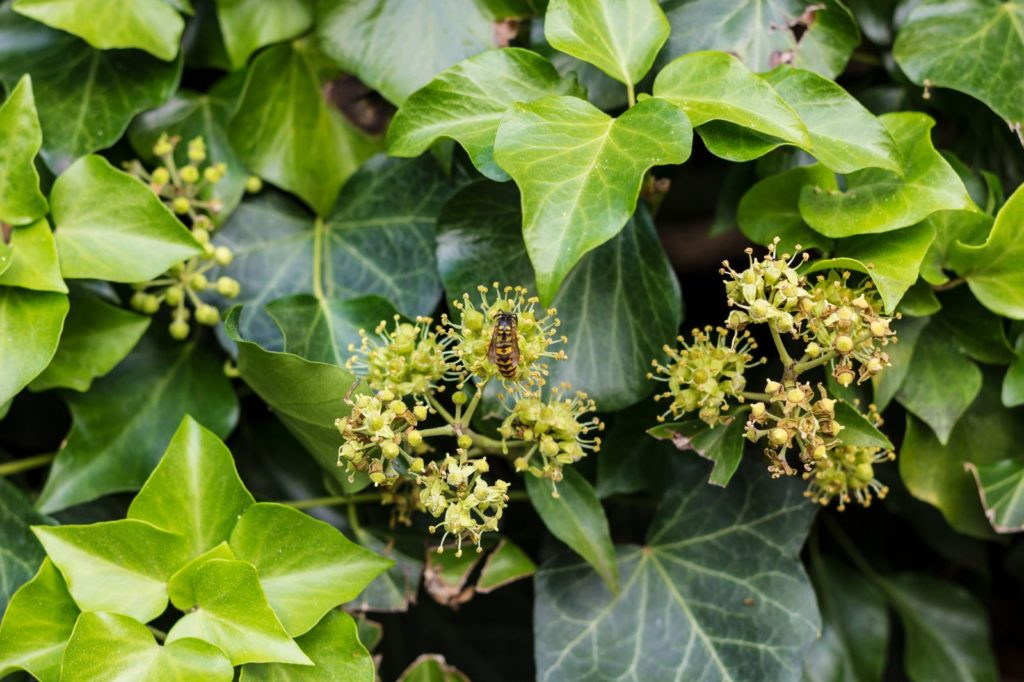 Bee Friendly Shrubs 14, Best Garden, Home And DIY Tips