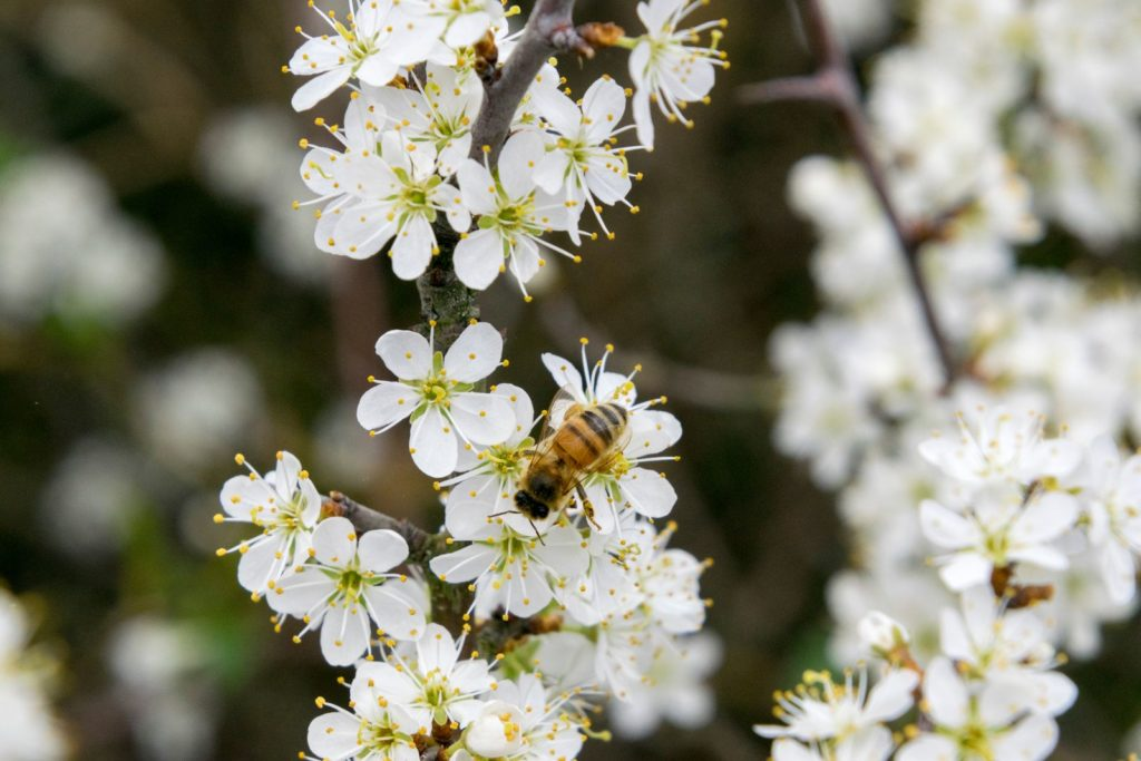 Bee Friendly Shrubs 4, Best Garden, Home And DIY Tips