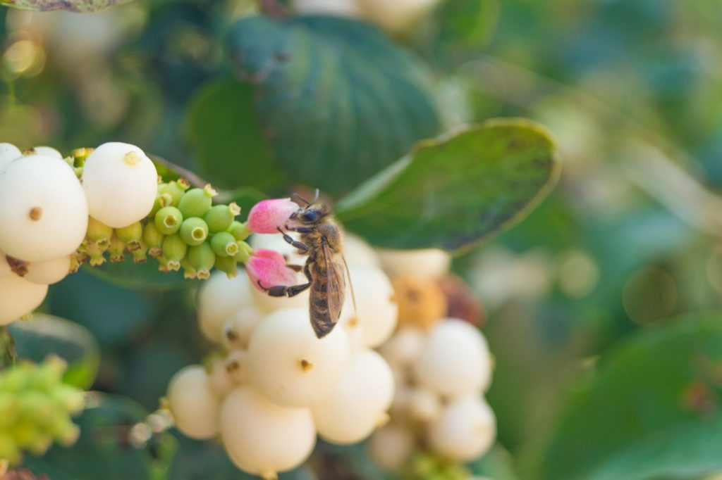 Bee Friendly Shrubs 5, Best Garden, Home And DIY Tips