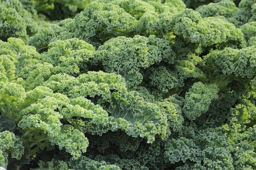 Brassicas 1024x683, Best Garden, Home And DIY Tips