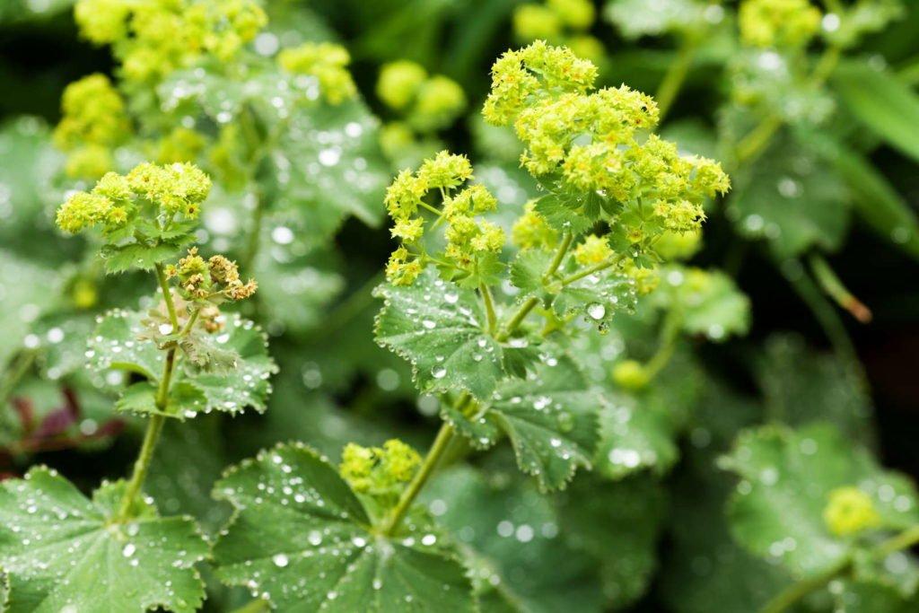 Easy Care Garden Plants 1, Best Garden, Home And DIY Tips